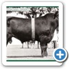 1989 Brisbane Royal Show Grand Champion Fieldmarshall F22