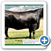2006 purchased 4 cows in the Hoff dispersal sale - Hoff Blackbird