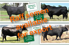 Raff Genetics available Internationally